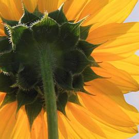 Valerie Loop - Sunflower Back
