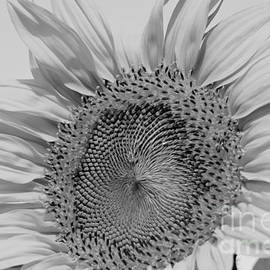Wilma  Birdwell - Sunflower Black and White