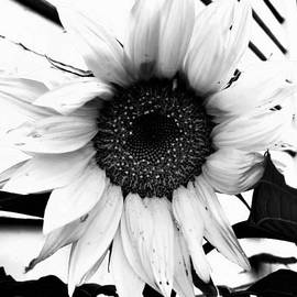 Naomi Burgess - Sunflower Blossom BNW