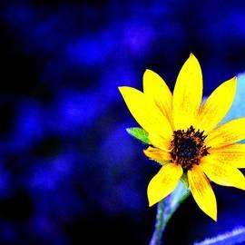 Karen  Majkrzak - Sunflower Blues