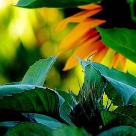Karen  Majkrzak - Sunflower Bud and Leaves