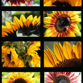 Mary Bedy - Sunflower Collage 2