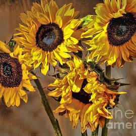 Sheila Laurens - Sunflower Drama