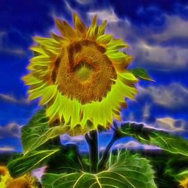Allen Beatty - Sunflower Electrified