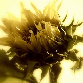 Janine Riley - Sunflower - Fare thee well
