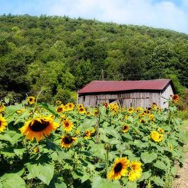 Trina  Ansel - Sunflower Farm