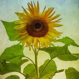 Gabrielle Libby - Sunflower