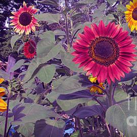 Tina M Wenger - Sunflower Group