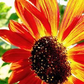 Karen  Majkrzak - Sunflower Joy