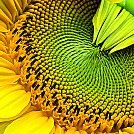 Lori Pessin Lafargue - Sunflower Kaleidescope