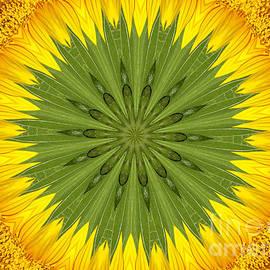 Rose Santuci-Sofranko - Sunflower Kaleidoscope 3