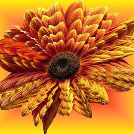 MTBobbins Photography - Sunflower Layers on Warm Colors
