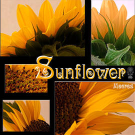 Sandra Foster - Sunflower Macro Picture Collage