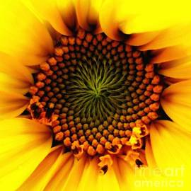 Rose Santuci-Sofranko - Sunflower Macro with Oil Painting Effect