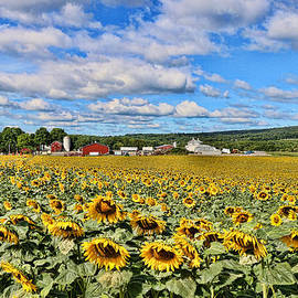 Allen Beatty - Sunflower Nirvana 1