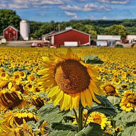 Allen Beatty - Sunflower Nirvana 21