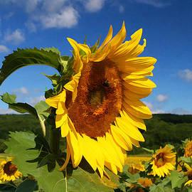 Allen Beatty - Sunflower Nirvana 22