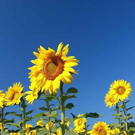 Allen Beatty - Sunflower Nirvana 41