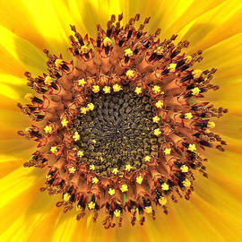 Leslie Reagan -  Joy To The Wild Photos - Sunflower Nucleous Beauty