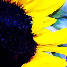 Nancy E Stein - Sunflower On The Side