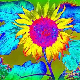 Ed Weidman - Sunflower Pop