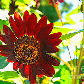 Luther  Fine Art - Sunflower - Red Blazer - Luther Fine  Art