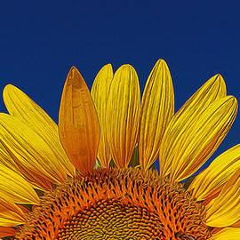 Allen Beatty - Sunflower Rising