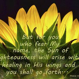 Sandi OReilly - Sunflower Scripture Sun arises