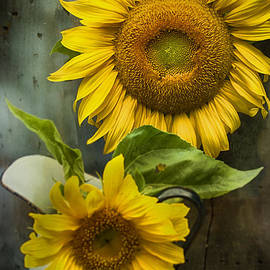 Kathy Jennings - Sunflower Series II