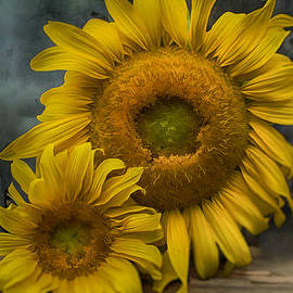 Kathy Jennings - Sunflower Series III