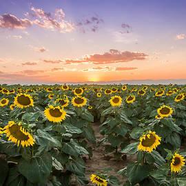 Kari Espeland - Sunflower Sunset
