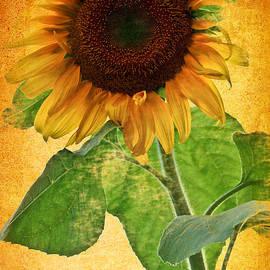 Carol F Austin - Sunny Sunflower