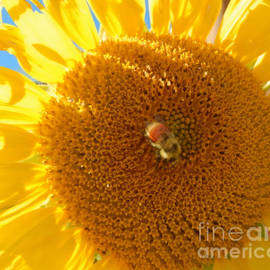 Heather Coen - Sunflower Sunshine and Bee