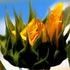 Karen Wiles - Sunflower Teardrop