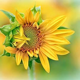 Carolyn Derstine - Sunflower version of a Bad Hair Day