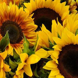 Diane Lent - Sunflowers at Union Square Farmers Market
