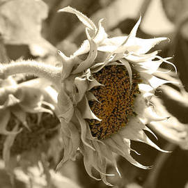 Lali Kacharava - Sunflowers
