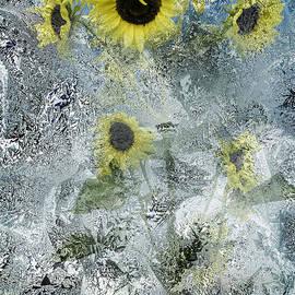 Diane Schuster - Sunflowers With Splash