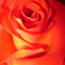 Tara  Shalton - Sunkissed Orange Rose 10