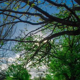 Naomi Burgess - Sunlight Through The Trees