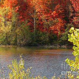 Ann Horn - Sunlit Autumn