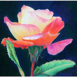 Mariarosa Rockefeller - Sunlit Rose