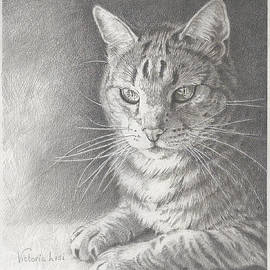 Victoria Lisi - Sunlit Tabby Cat
