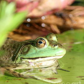 Neal  Eslinger - Sunning American Green Frog at Roseland Lake