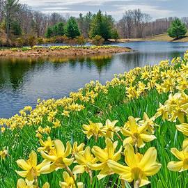Bill  Wakeley - Sunny Daffodil