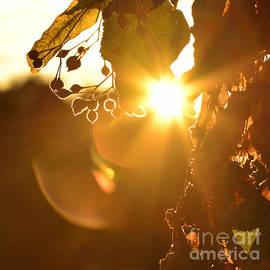 Joshua McCullough - Sunny Day