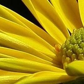 Bruce Bley - Sunny Delight