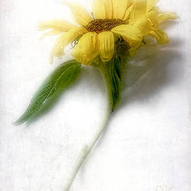 Louise Kumpf - Sunny Sunflower #3
