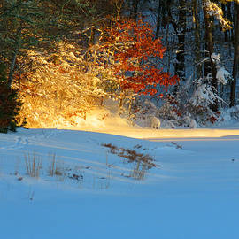 Dianne Cowen - Sunrise After the Blizzard