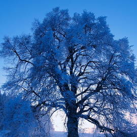 Roman Aj - Sunrise and Tree